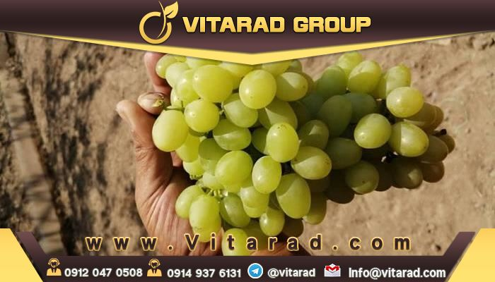are grapes good for you?