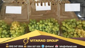 Buy grapes wholesale