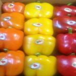 bell pepper exports