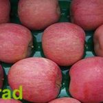 Red Delicious apple export