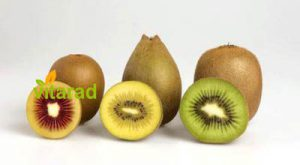 golden kiwi fruit price
