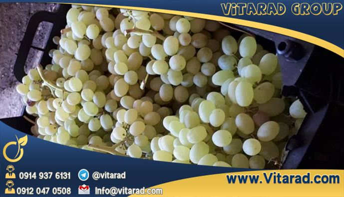 Packing and sorting grapes