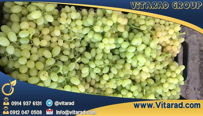 Iran export grape and its tree