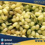 Buy grapes for export from Iran