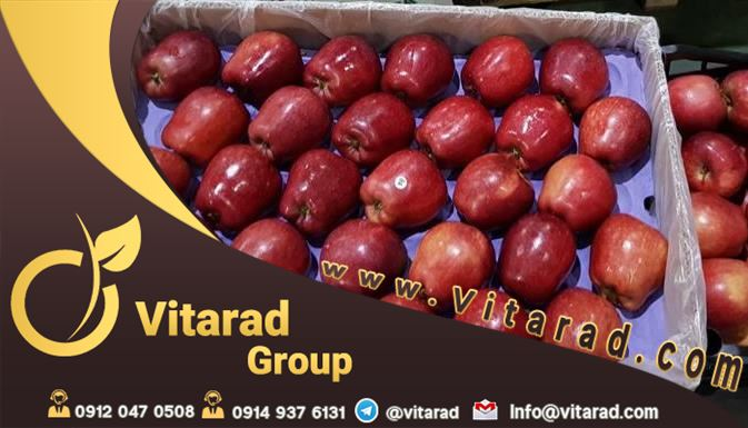 Wholesale of Iranian apple
