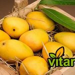 Buy Indian mango Singapore