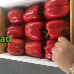 Fresh bell pepper export