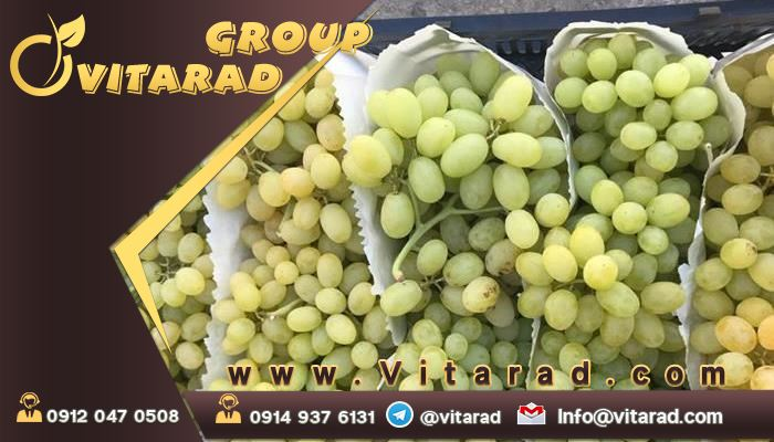 Features of Iranian grape