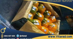 Isfahan bell pepper for export